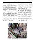 (Rodentia: Cricetidae) capturada en siembras de arroz - Page 4