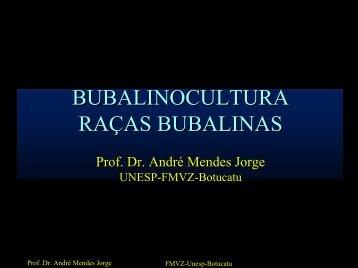 RACAS BUBALINAS - Unesp