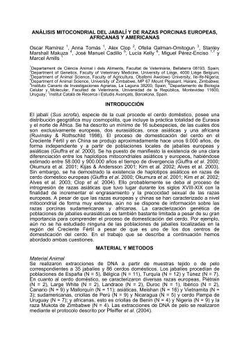 análisis mitocondrial del jabalí y de razas porcinas ... - acteon