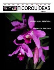 Boletín Mensual, Junio 2007 - Asociación Costarricense de ...