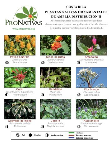 PLANTAS NATIVAS ORNAMENTALES - Red Pro Nativas