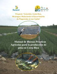 Manual de Buenas Prácticas Agrícolas para la producción de piña ...