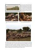 Buitre leonado.pdf - Jorge Rubio - Page 7