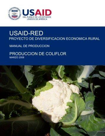produccion de coliflor - Fintrac Inc.