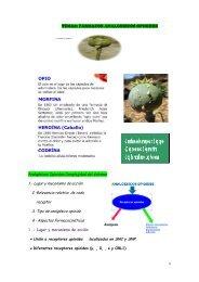 TEMA8: FARMACOS ANALGESICOS OPIOIDES