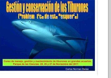 Gestión y conservación de los tiburones