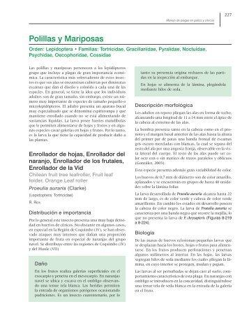 Polillas y Mariposas - Avocadosource.com