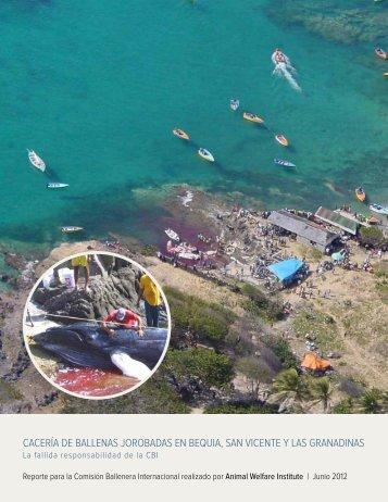 CaCería de Ballenas joroBadas en Bequia, san ViCente y las ...