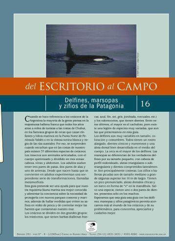 Guía para reconocer delfines, marsopas y zifios ... - Claudio Bertonatti