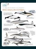 Guía para reconocer delfines, marsopas y zifios ... - Claudio Bertonatti - Page 2