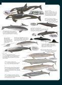 Guía para reconocer delfines, marsopas y zifios ... - Claudio Bertonatti - Page 3