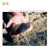 Margaritona - Gobierno de Aragón