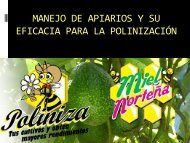 Manejo de apiarios y su eficiencia para la polinización - unifrut