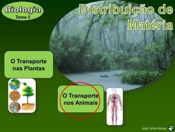 Transporte nos animais jcmorais.pdf - SusanaPacheco.eu