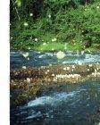 O Amapá - Conservação Internacional - Page 4