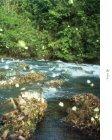 O Amapá - Conservação Internacional - Page 5