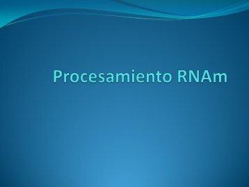 Procesamiento RNAm
