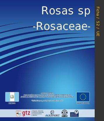 Ficha52. Rosa