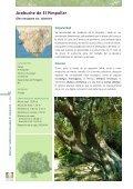 DOC CADIZ.qxp - Junta de Andalucía - Page 4