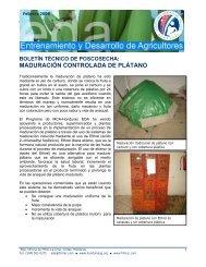 maduración controlada de plátano - Cuenta del Milenio - Honduras