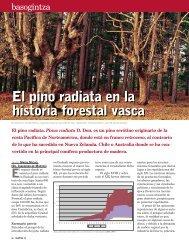 El pino radiata en la historia forestal vasca El pino radiata en la ...
