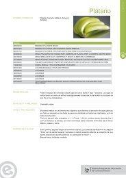Plátano - Siicex