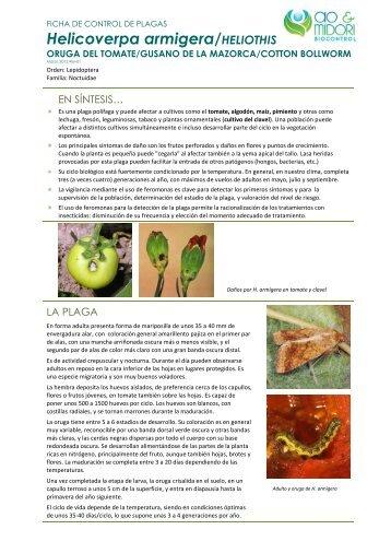 Descargar Ficha de Plaga (PDF) - AoMidori Biocontrol