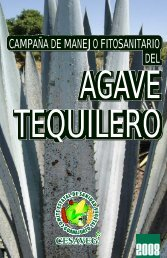folleto agave 08.cdr - cesaveg