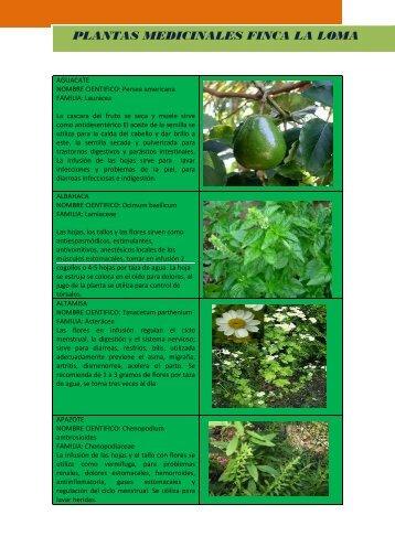 plantas medicinales finca la loma plantas medicinales finca la loma