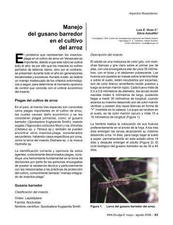 Manejo del gusano barredor en el cultivo del arroz - INIA