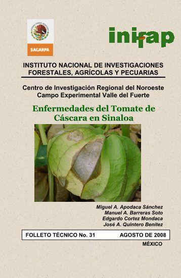 Enfermedades del Tomate de Cáscara en Sinaloa - Bienvenidos a ...