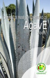 folleto agave 07.cdr - cesaveg