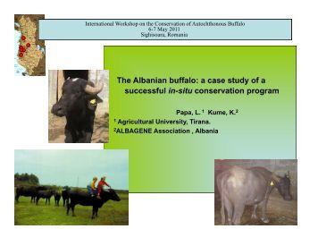 Buffalo case study
