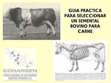Guía Práctica para seleccionar un semental Bovino de Carne