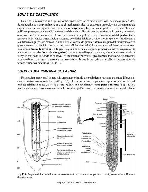 94 2 Endomicorrizas En L