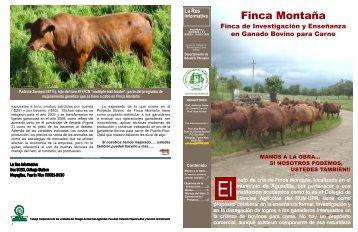 La Res Informativa vol. 12 núms. 1 - Bovinos para Carne - Uprm