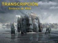Transcripción Sintesis de RNA