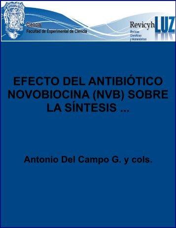 Efecto del antibiótico novobiocina (NVB) sobre la síntesis de RNA y ...