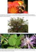 """""""La Polinización - Las abejas - El arándano"""", """"La apicultura: una ... - Page 3"""