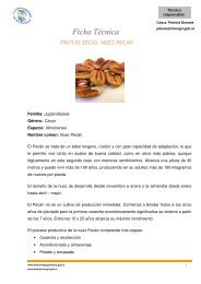 Frutas Secas: Nuez Pecán - Alimentos Argentinos
