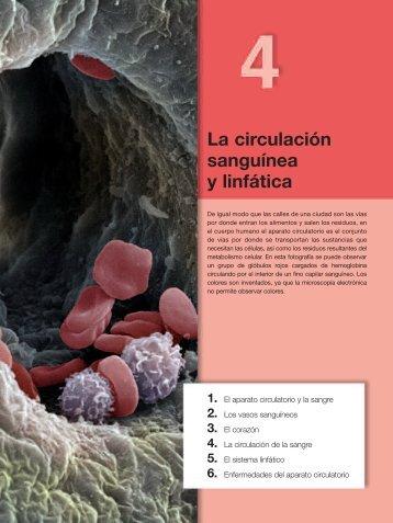 La circulación sanguínea y linfática - Aula 2005
