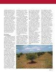 La trufa, estimulante para impulsar el desarrollo de las zonas ... - Page 2