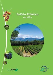 Sulfato Potásico en Viña - Tessenderlo Group