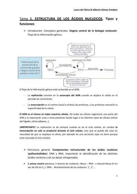 Tema 1 Estructura Acidos Nucleicos Veoapuntes Com