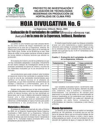 Hoja Divulgativa 6 - FHIA