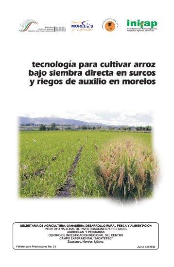 Tecnología Para Cultivar Arroz Bajo Siembra Directa En Surcos