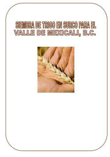 SIEMBRA DE TRIGO EN SURCOS PARA EL VALLE DE ... - Oeidrus