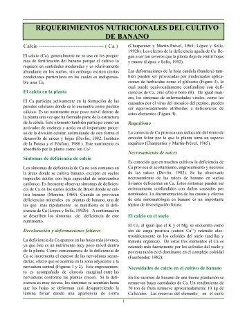 REQUERIMIENTOS NUTRICIONALES DEL CULTIVO DE BANANO