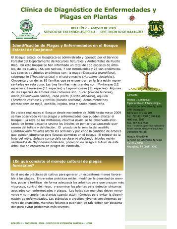 Identificación de Plagas y Enfermedades en el ... - SEA - UPRM