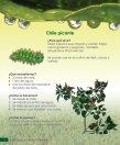 Insecticidas y Abonos Orgánicos - Ipade - Page 6